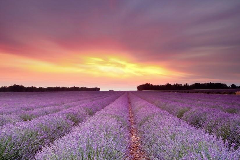 lavender wallpaper 3840x2160 for iphone 5