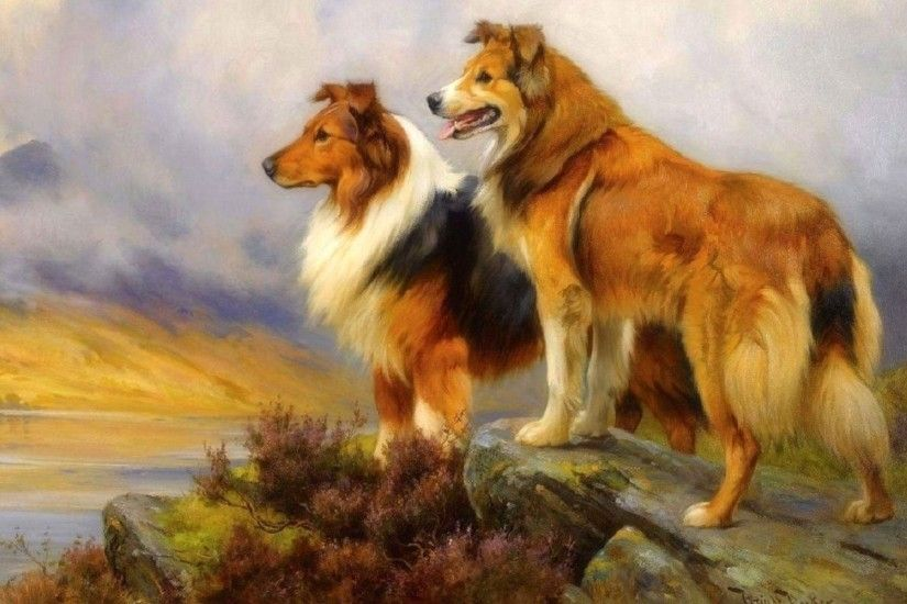 Bild: Hübsches Collie Dogs Lookout wallpapers and stock photos. «