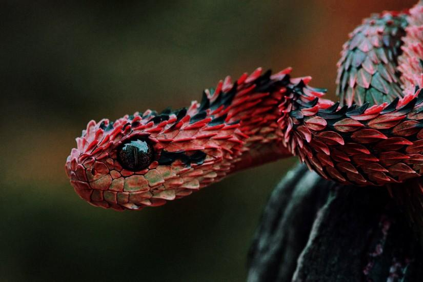 Most Beautiful Animal Snake Desktop Wallpaper
