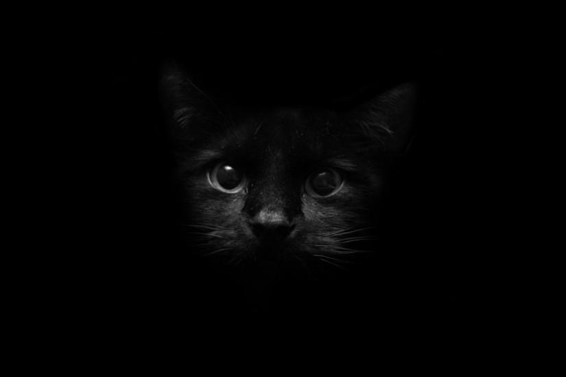 ... Black Cat Wallpapers ...