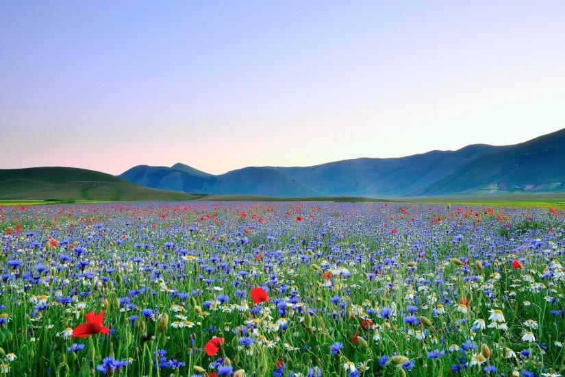 Desktop wallpaper field of flowers. Beautiful Picture Of Nature