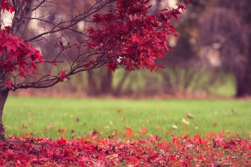 #AAAA55 Color - Fall Splendor Autumn Leaves Nature Wallpaper 3d For Desktop  Free Download for