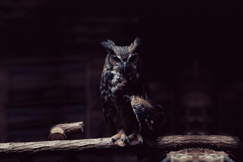 cool owl wallpaper 1920x1080 1080p