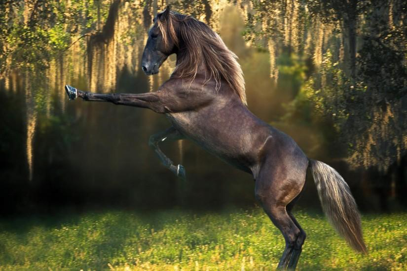 top horse backgrounds 1920x1080 for iphone