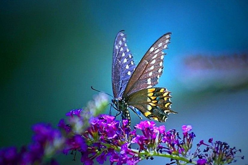 385 best images about <b>butterfly</b> pictures and paper on