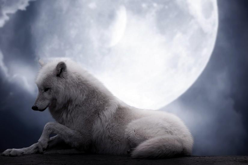 Preview wallpaper wolf, moon, lie, predator 2560x1440