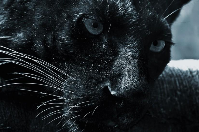 Stunning Black Cat #1