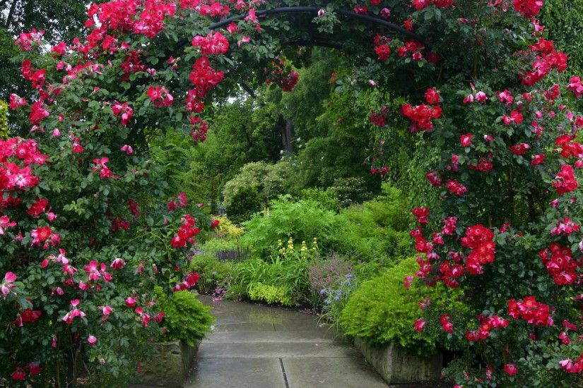 Man Made - Garden Flower Rose Red Rose Red Flower Arch Green Wallpaper