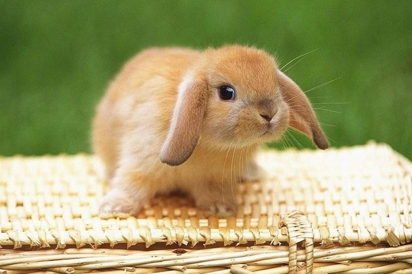 HD Bunny Wallpaper | Download Free - 114651