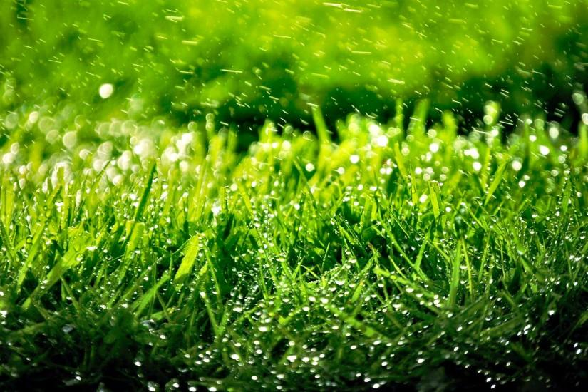 widescreen grass wallpaper 3040x1900 4k