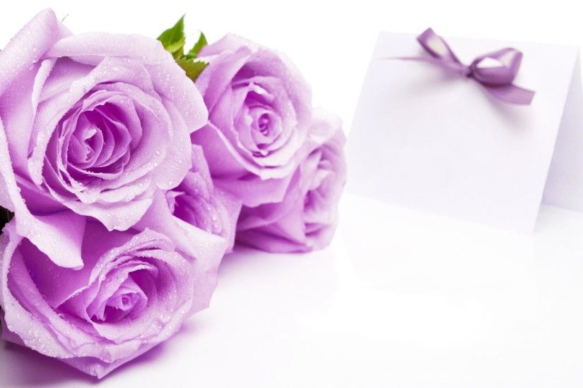 Beautiful Soft Purple Roses on White Background Wallpaper