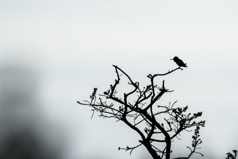 Tree Silhouette With Birds Wallpaper High Quality