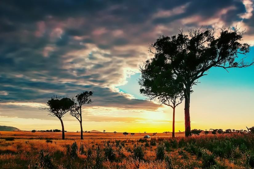 Trees In African Savanna Wallpapers And Images #17901 Wallpaper .