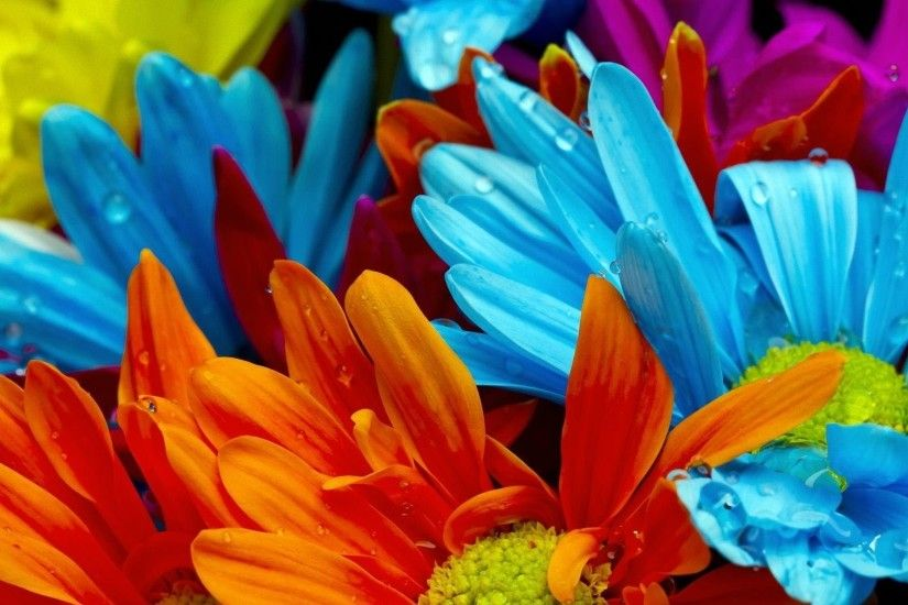 Multicolor Wallpaper Flower Wallpaper