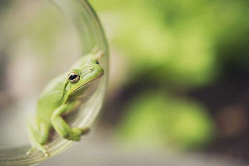 frog wallpaper hd backgrounds images (Orton Allford 1920x1200)