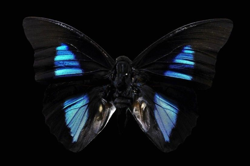 Black Butterfly Background ...
