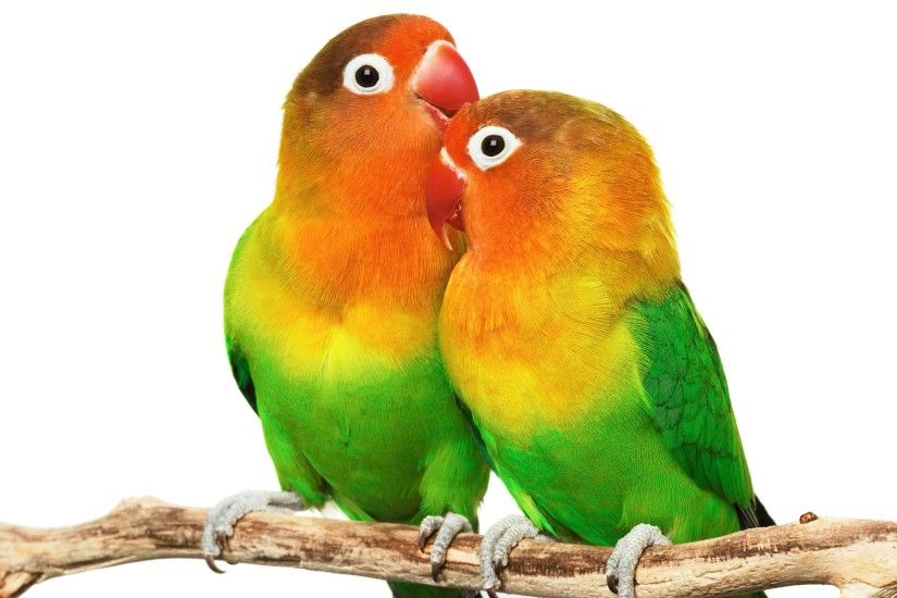 beautiful wallpaper Love Birds