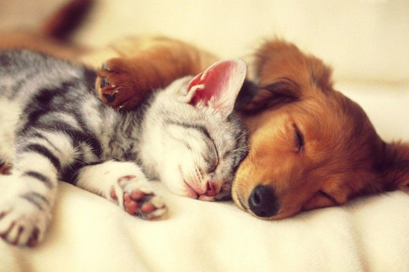 ... cute cat and dog sleep wallpaper.