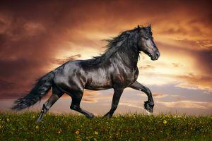 download horse backgrounds 2560x1600 for android tablet