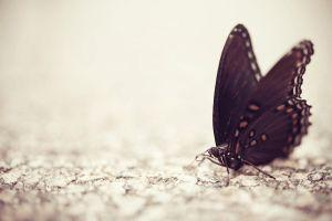 most popular butterfly backgrounds 1920x1200 for macbook